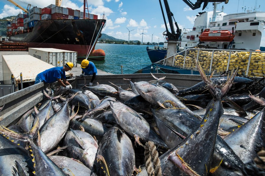 Fishermen at the Port of Victoria removing fish from a fishing vessel in Seychelles